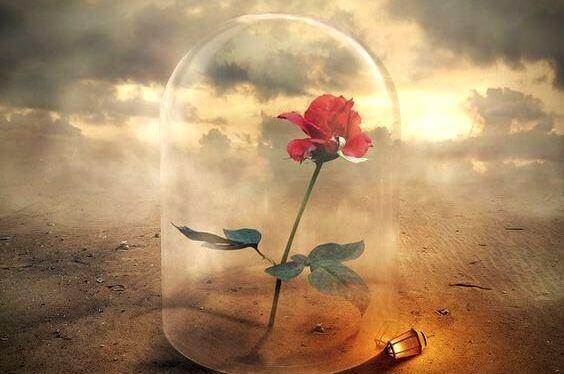 rose-sous-verre
