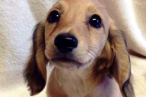 Les yeux d'un animal ont le pouvoir de parler un langage unique
