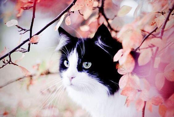 L'histoire du chat tacheté et de l'hirondelle Sinhá