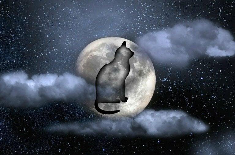 gato-noche-768x508