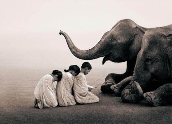 enfants-elephant