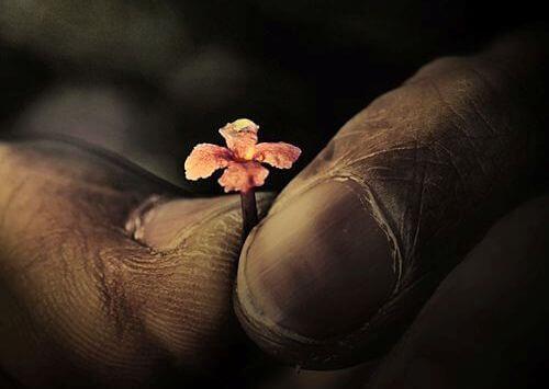 mains-et-fleur