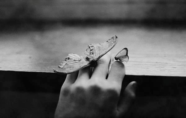 mains-papillon