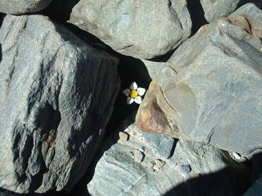 marguerite-pierres