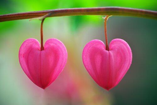 Fleurs dans le désert, un conte qui vous aidera à reconnaître l'amour