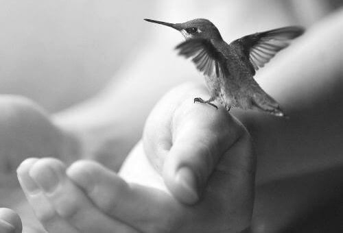 manos-nido-vacio
