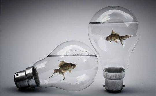 peces-en-bombilla