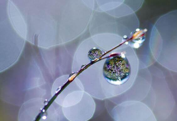 planta-con-rocio-representado-llanto-emocional-1
