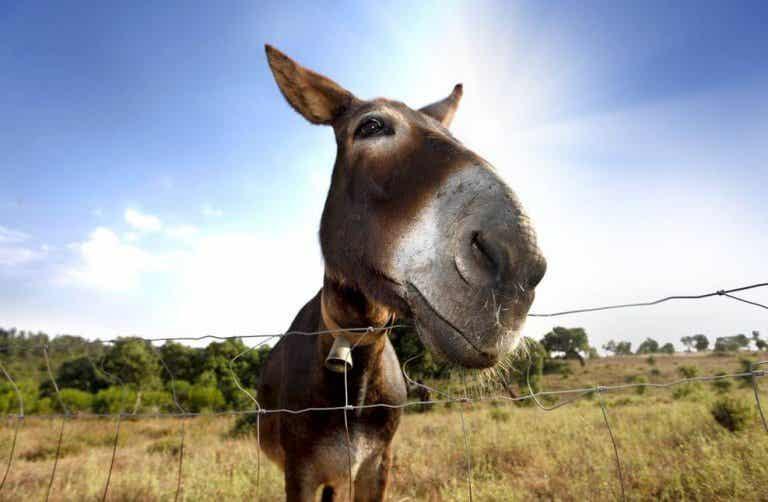 Il y a des personnes qui sont comme l'âne de Buridan