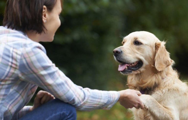 Savez-vous comment les chiens reconnaissent nos visages ?