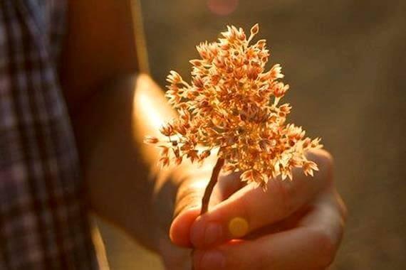 La bonté, si elle n'est pas couplée à de l'action, ne sert à rien