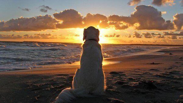 Que peuvent nous apprendre les chiens à propos de nos problèmes ?