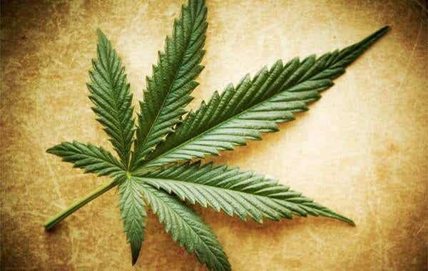 Mythes et vérités sur le cannabis