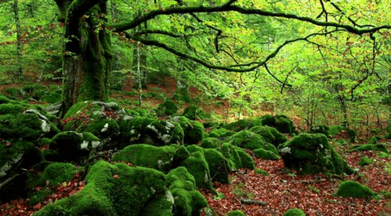 """Les """"bains de forêt"""", un antidote contre le stress"""