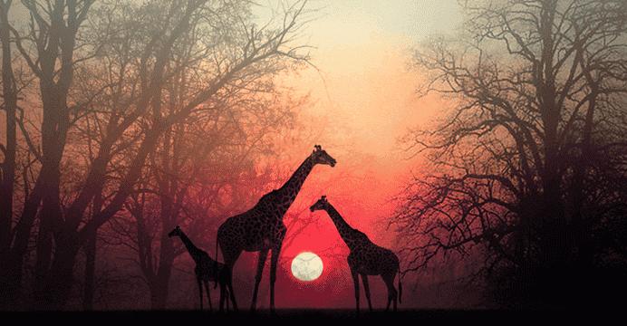 """""""Laissez un peu de temps à votre âme pour qu'elle vous rejoigne"""", un beau récit africain"""