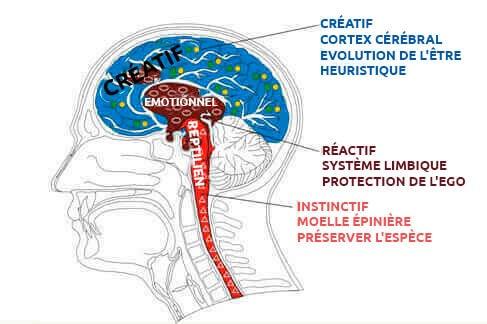 cerveau reptilien