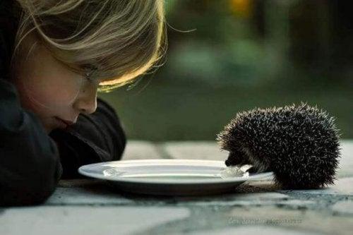 la bonté d'un enfant envers un hérisson