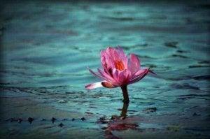 fleur de lotus représentant la génération d'aujourd'hui