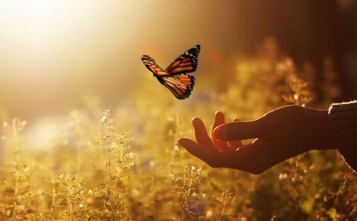 papillon s'envolant d'une main dans un champ