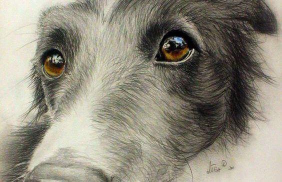 force regard chien