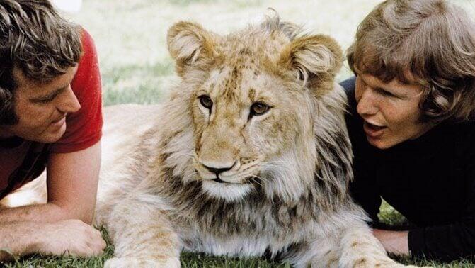 La tendre histoire de Christian, le lion