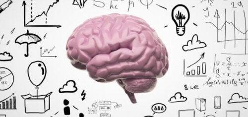 cerveau et nouveaux souvenirs