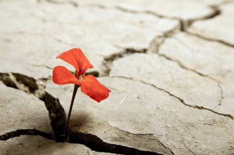 fleur poussant dans la terre sèche