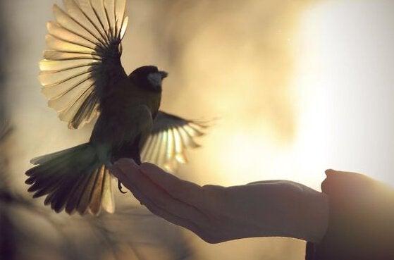 oiseau prenant son envol depuis une main
