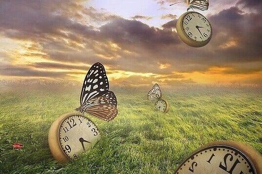 horloges et papillons dans un champ