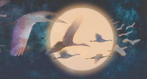 oiseaux devant la lune