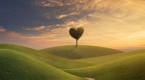 arbre en forme de cœur
