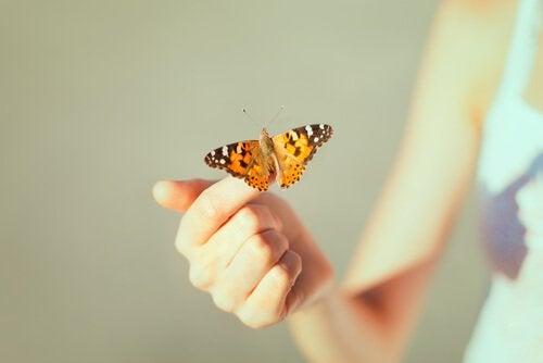 papillon sur une main