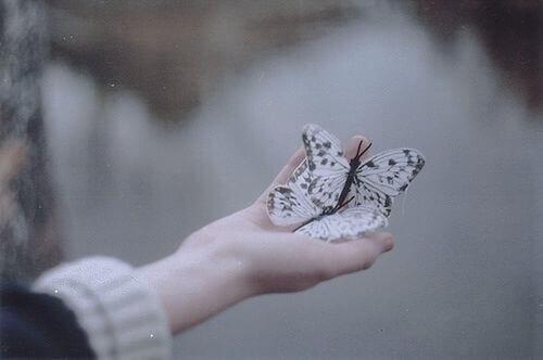 papillons dans une main