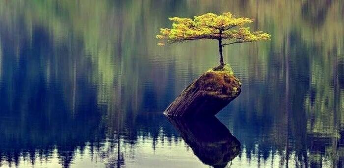 arbre résilient