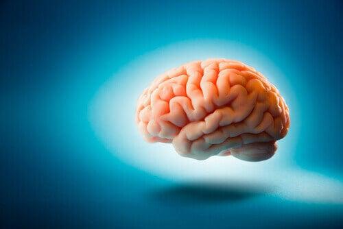 cerveau sur un fond bleu