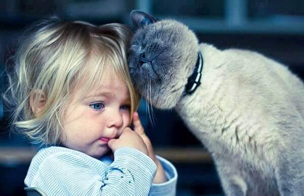 Chat-thérapie : 5 avantages de vivre avec un chat