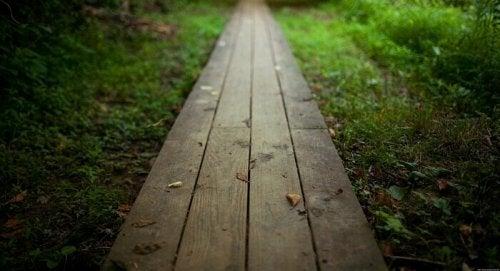chemin vers un bois