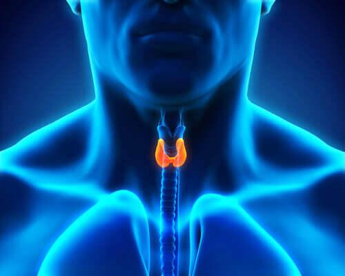Thyroïde et humeur : quelle est leur relation ?