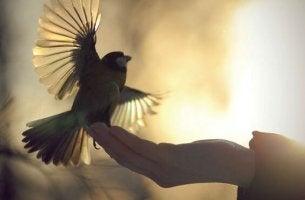 main avec un oiseau