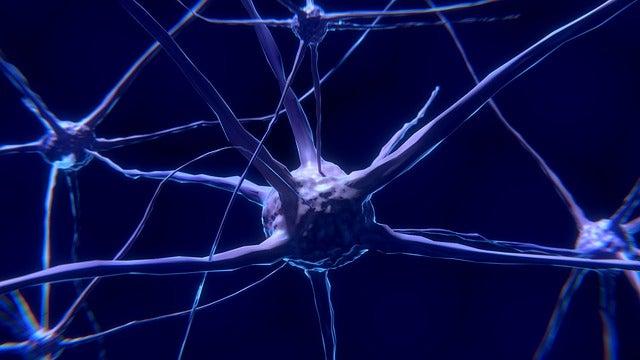 Le neurone : caractéristiques et fonctionnement