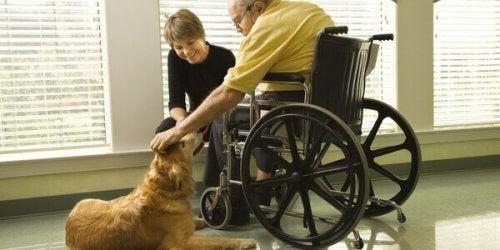 chien avec personne en fauteuil roulant