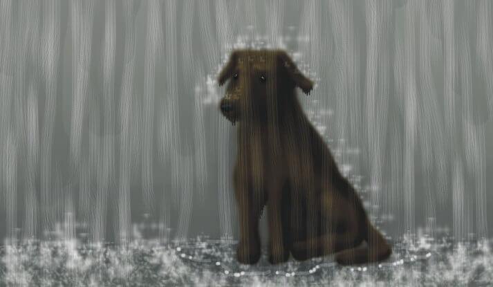 chien sous la pluie