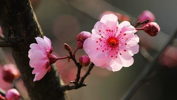 Les 5 clés de la psychologie japonaise