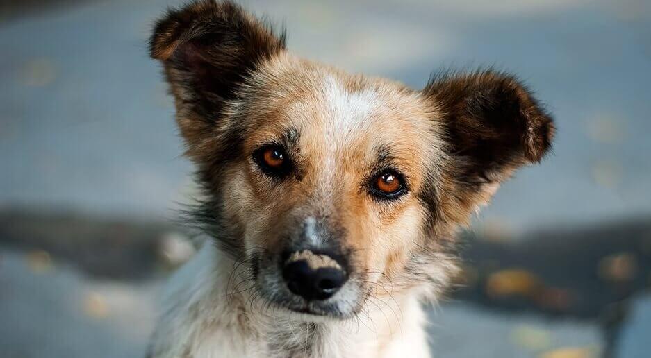 Le petit chien curieux, un très beau conte sur le destin