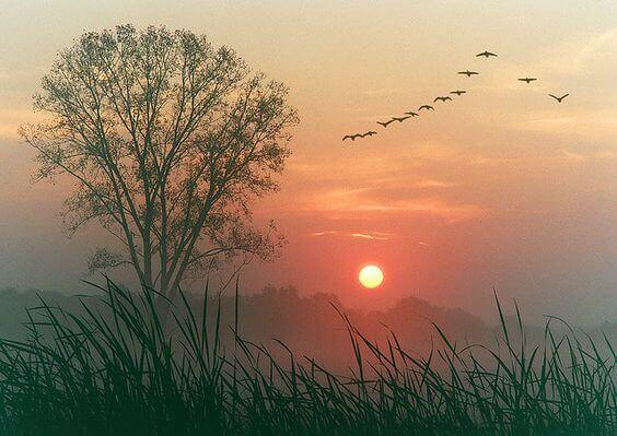 paysage au coucher de soleil