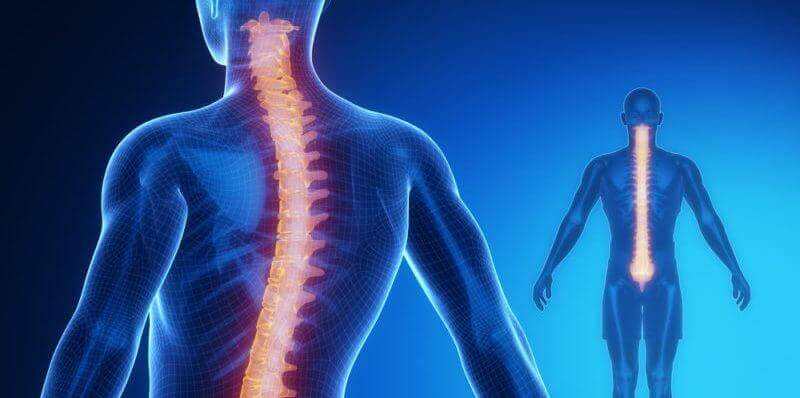 Moelle épinière: anatomie et physiologie