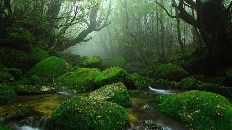 paysage de sous bois