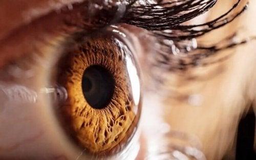 yeux couleur miel