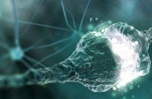 exemple de synapse