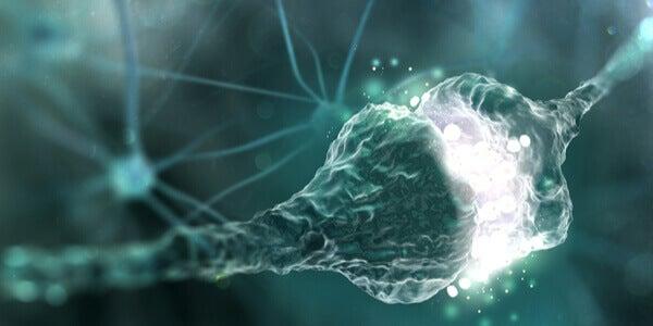 Qu'est-ce que l'espace synaptique ?